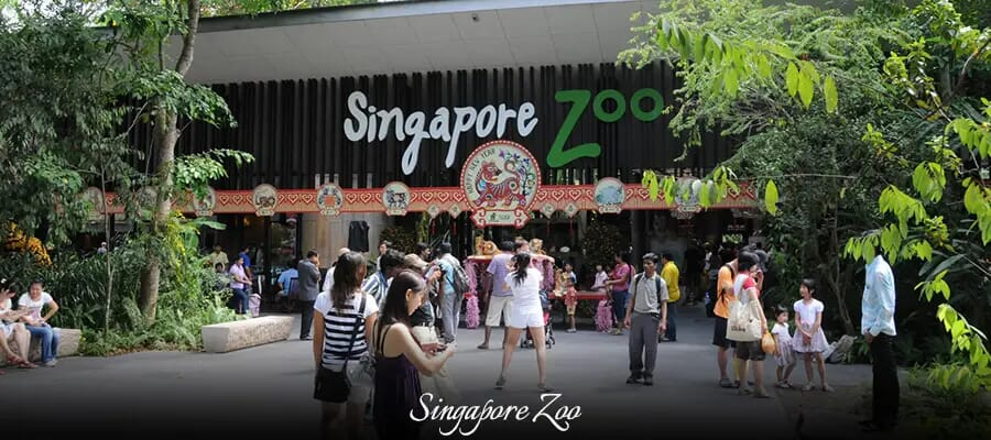 Singapore Zoo, places to visit in singapore