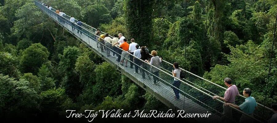 Tree-Top Walk at MacRitchie Reservoir